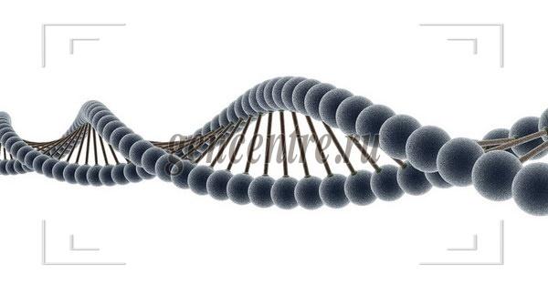 Следы истории в человеческой генетике